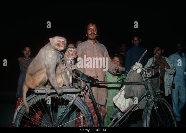 Ein Affe-Trainer soll auf seinem Fahrrad nach Hause zurückkehren. Seine zwei Affen sitzen hinter dem Sitz. Stockbild