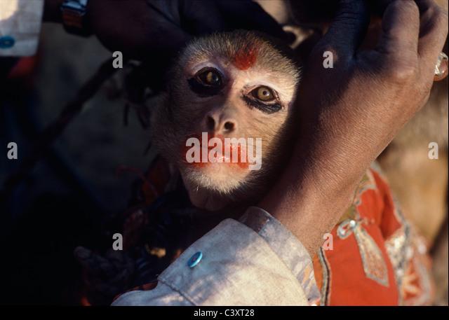 Ein Affen hat Make-up setzen darauf durch seinen Trainer vor einem Straßenkunst in Neu-Delhi. Neu-Delhi, Indien Stockbild