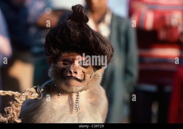 Durchführung von Affen trägt Make-up und Perücke. Neu-Delhi, Indien Stockbild