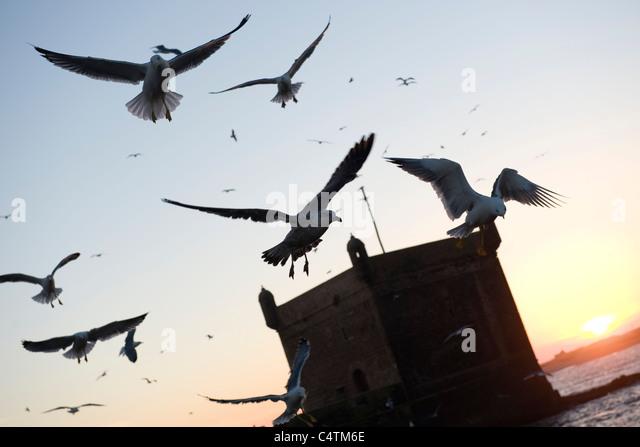 Möwen fliegen über Meer Stockbild