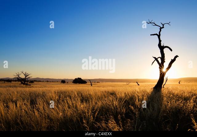 Die Landschaft zeigt die einzigartige Ökologie der Namibwüste Südwesten oder pro - Namib. NamibRand Stockbild