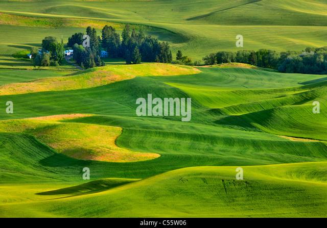 Vogelperspektive Blick auf grünen Wiesen, Steptoe Butte, Palouse, Washington State, USA Stockbild