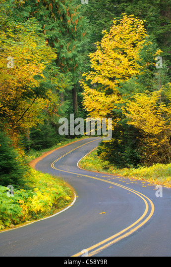 Herbst auf der West Cascades National Scenic Byway, WIllamette National Forest, Oregon. Stockbild