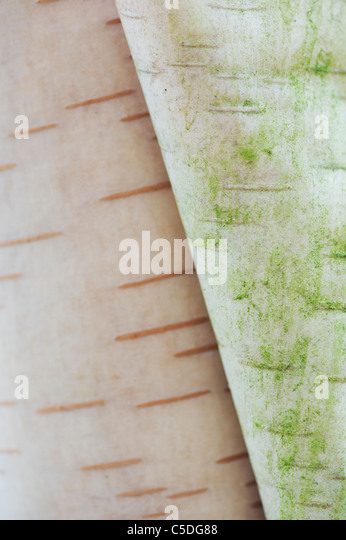 deciduous tree stockfotos deciduous tree bilder alamy. Black Bedroom Furniture Sets. Home Design Ideas