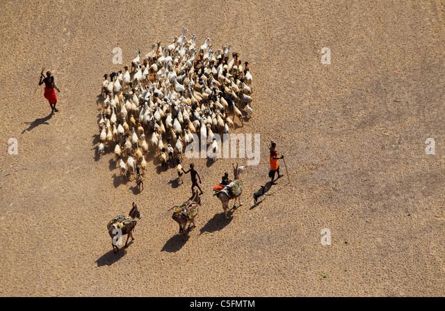 Ziegen und Esel bei der Koroli Federn in der Chalbi Wüste nördlich von Kenia nahe der Grenze zu Äthiopien. Stockbild