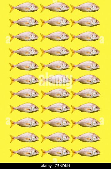 Fisch auf einem gelben Hintergrund Stockbild