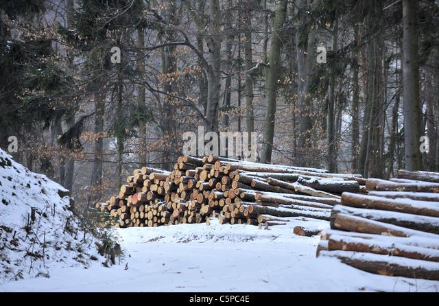 Winter Im Kobernausser Wald, Winter im Kobernausser Wald, Oberösterreich Stockbild