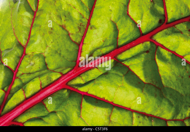 Mangold, Blatt, full-Frame, close-up Stockbild