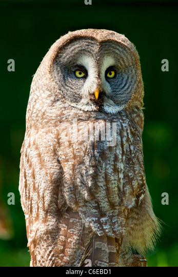 Tiere im Wald von Rambouillet Stockbild