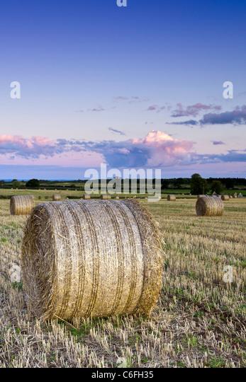 Englische Landschaft im späten August Stockbild