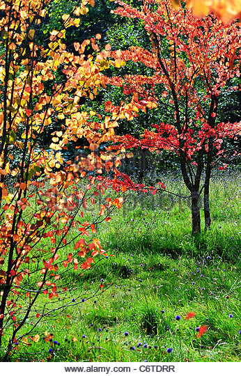 Sommer Wald Farbe Stockbild