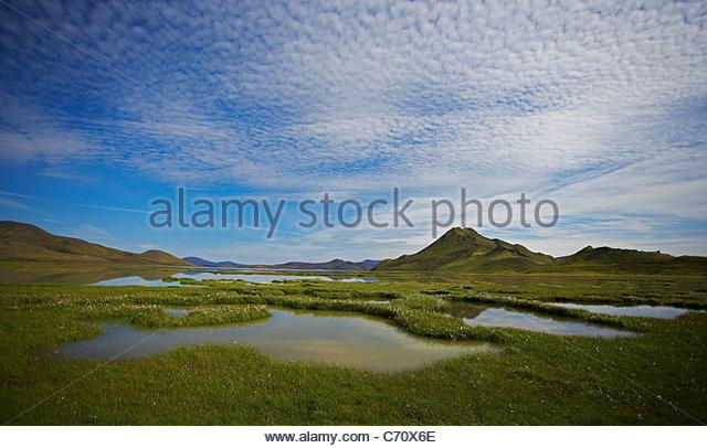 Grasbewachsenen Sumpf in ländlichen Landschaft Stockbild