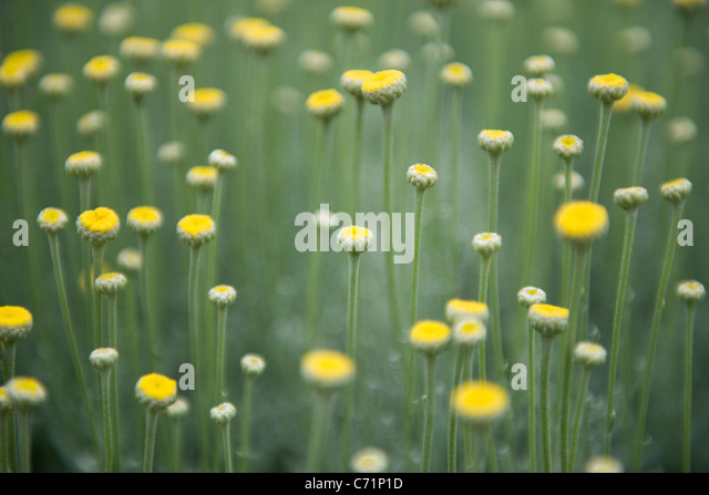 Wildblumen Stockbild