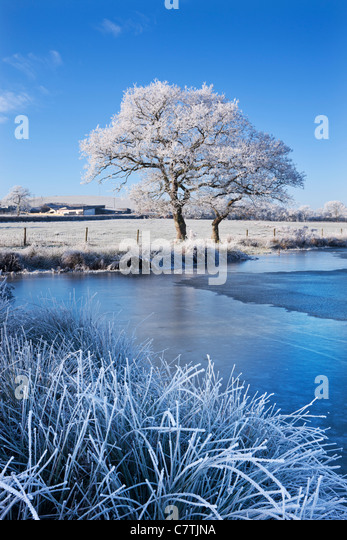 Hoar bereifte Bäume und zugefrorenen See im Winter, Morchard Road, Mid Devon, England. Winter (Dezember) 2010. Stockbild