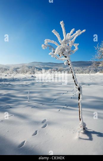 Winter-Blume Stockbild