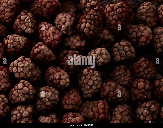 Gefrorene Himbeeren Stockbild
