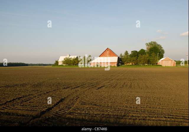 Wirtschaftsgebäude und Prärie, in der Nähe von Champaign-Urbana, Illinois, USA Stockbild