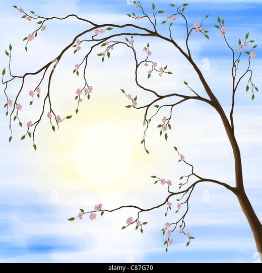 Illustration des Sakura Kirsche Blüte im Frühjahr Sonnenaufgang Landschaft gegen die Sonne Stockbild