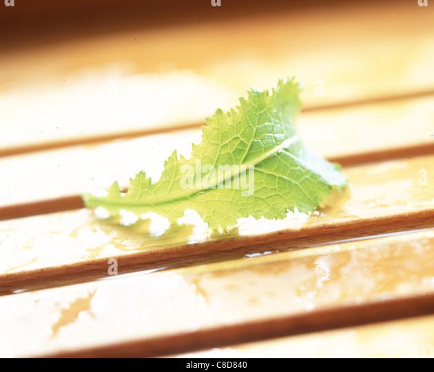Grünes Blatt auf Holzlatten Stockbild