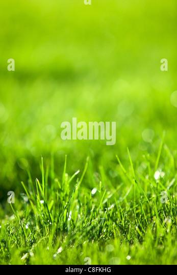Natur-Hintergrund: grüne üppige Rasen. Stockbild