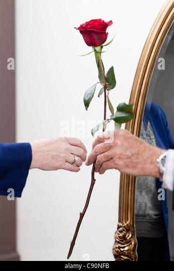 Ein Alter Mann gibt eine Rose, einer alten Frau Stockbild