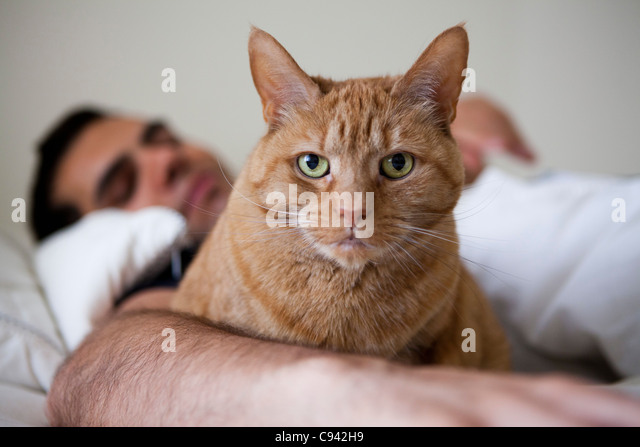 Ingwer-Katze mit Mann im Bett Stockbild