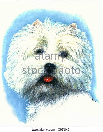 West Highland White Terrier Stockbild
