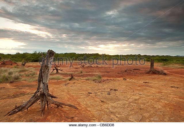 Trockene Baumstämme und erodierten Böden in Sarigua Nationalpark, Herrera Provinz, Republik Panama. Stockbild
