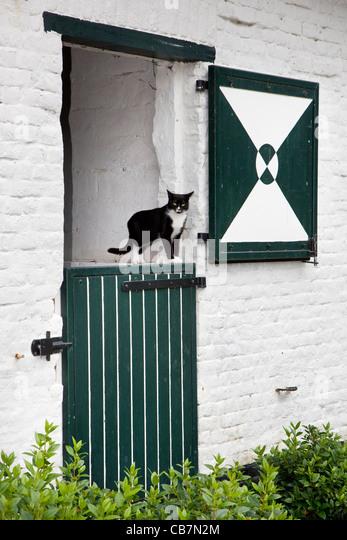 Inländische Hauskatze (Felis Catus) in Tür des Bauernhauses, Belgien Stockbild