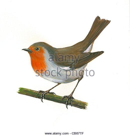 Robin Vogelarten Serie Songbird Stockbild