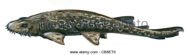 Serie Fisch, die Shark Ammenhaie Fisch Fische Stockbild
