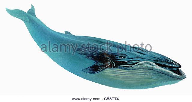 Serie Fisch Blauwal Wale Fisch Fische Stockbild