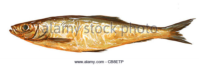 Serie Fisch Kieler Sprotten Fisch Fische Stockbild