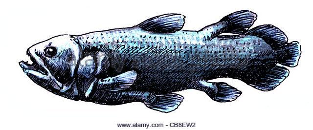 Serie Quastenflosser optional Fisch Fisch Fisch Fische Freisteller ausgenommen Berühr Stockbild