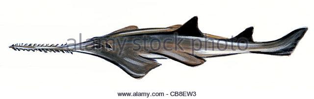 Serie Fisch, die Sgehai Haie Fische Fische Stockbild