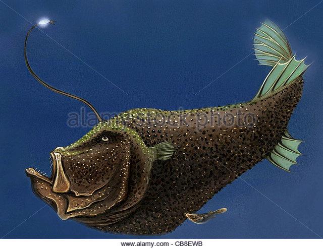 Serie Fisch, die Tiefsee riesigen Fischen Weibchen Fisch Fische Stockbild