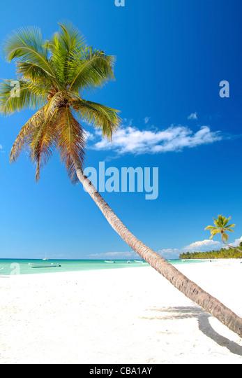 Kokospalme auf Karibik-Strand mit weißem sand Stockbild