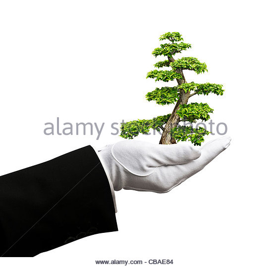 Baum in der hand Stockbild