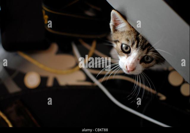 Nur wenige Wochen alte Kätzchen versteckt Stockbild