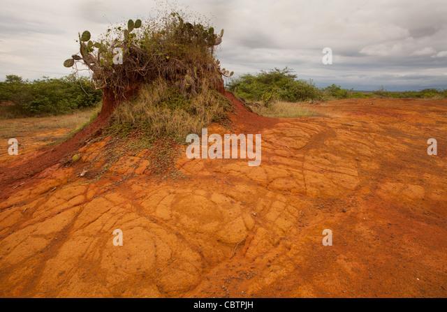 Erodierten Boden im Sarigua Nationalpark (Wüste) Herrera Provinz, Republik von Panama. Stockbild