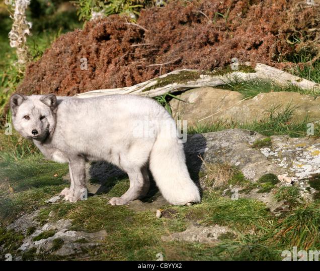 Valley zoo stockfotos valley zoo bilder seite 3 alamy for Wildparks in der nahe