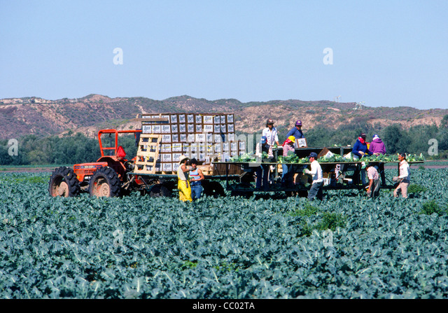 mexican migrant farm workers in stockfotos mexican. Black Bedroom Furniture Sets. Home Design Ideas