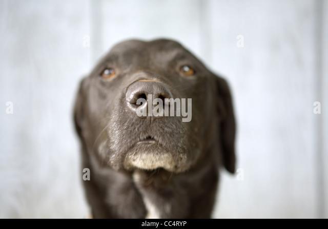 Schwarzer Hund Fahndungsfoto Stockbild