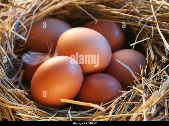Eiern im Stroh Stockbild