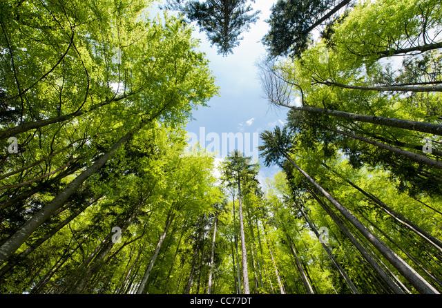 Weitwinkel-Blick auf eine bunte Frühlingswald Stockbild