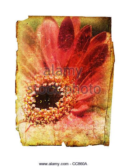 Vintage Blumen Papier Stockbild