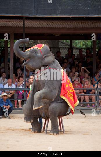 Elefanten-show in Thailand zoo Stockbild