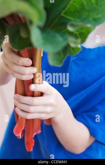 Junges Kind hält frisch gepflückt organischen Rhabarber aus seinem Garten. Perfekte Zutat für eine Stockbild