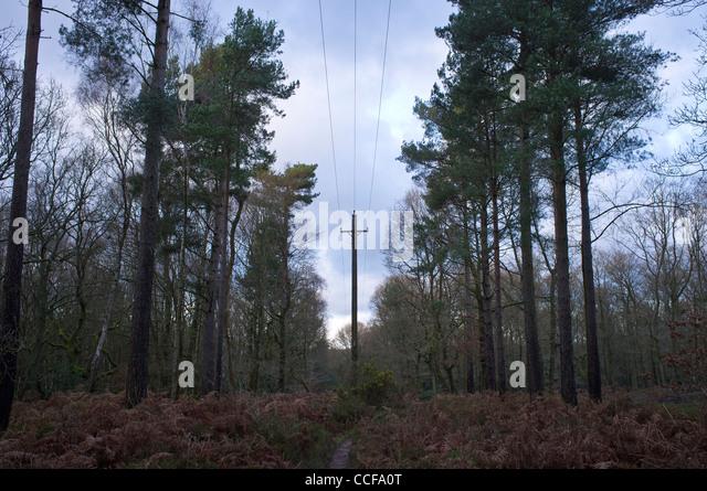 Stromkabel läuft durch den Wald auf Holmbury Hügel Woodland Surrey Stockbild