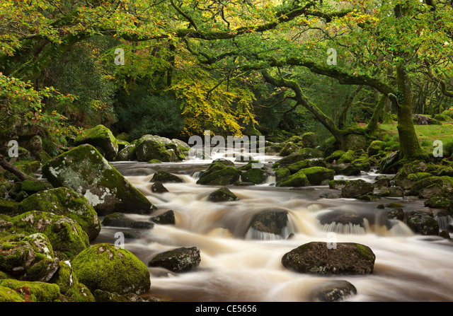 Fluß Plym stürzt hinter Moos bedeckt Felsbrocken auf seinem Weg durch Dewerstone Wood, Dartmoor, Devon, Stockbild